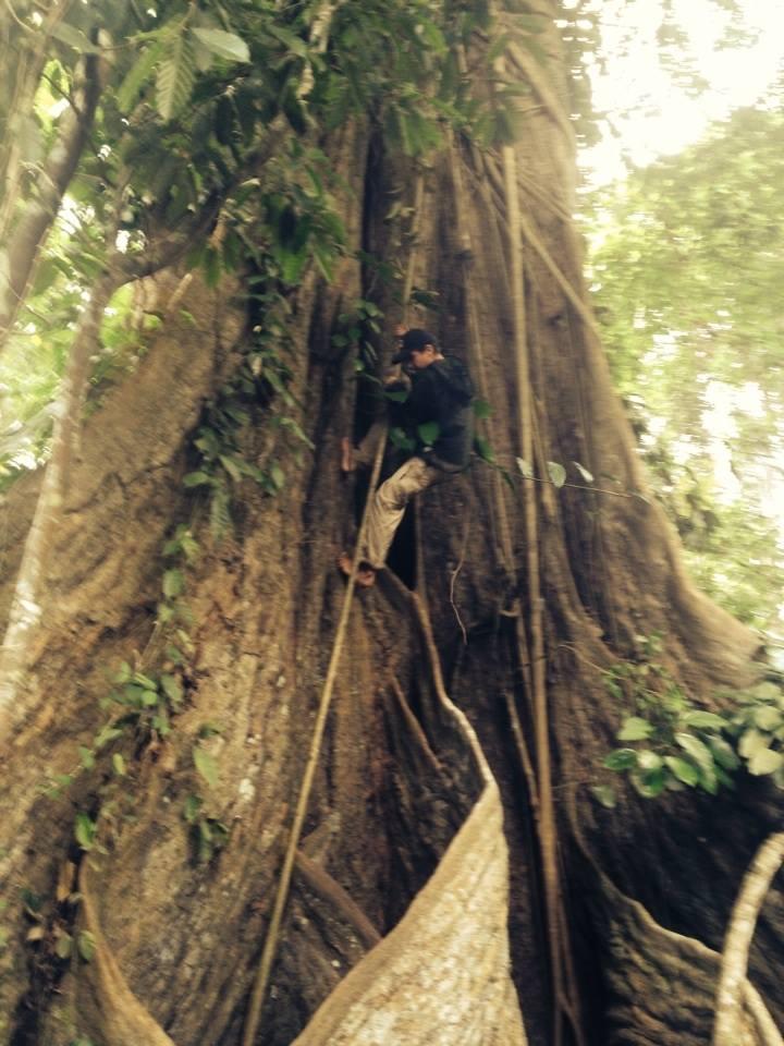 Дерево - наш самый первый дом, Первобытный дом.