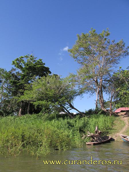 Сельва - перуанские джунгли