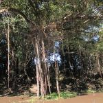 Красота амазонских джунглей