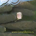 амазонские перуанские рыбы - пайче